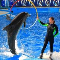 Три в одном. Прыжок дельфина через кольцо, которое держит  тренер стоя на плывушей белухе :: Vladimir 070549