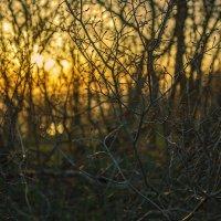 Апрельское утро на меловых холмах. 2016г :: Юрий Клишин