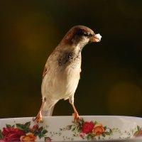угощение :: linnud