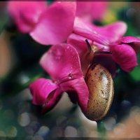 Девочки обожают розовое..) :: Ирина Сивовол