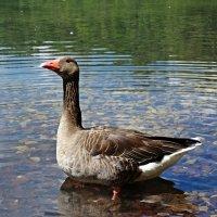 На озере :: Galina Dzubina