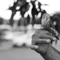 Не синица в руке :: Андрей Майоров