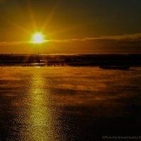Туманное утро :: Дмитрий Шилин