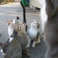 Кошки-баскетболистки: кто допрыгнет до корзины первой?.. :: Алекс Аро Аро
