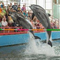 Прыжок дельфинов-2. :: Виктор Евстратов