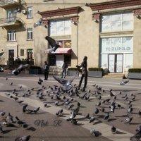 музыка для голубей :: maxim