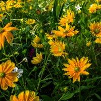 Цветы в Нордпарке Дюссельдорф :: Witalij Loewin