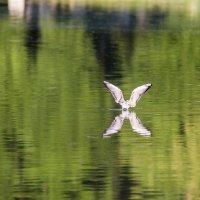 Чайка :: Dmitriy Martynenko