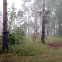 уже туман и скоро осень :: yuri Zaitsev