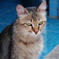 Кошка :: Лариса Журавлева