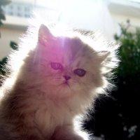Светяшка котик. :: Оля Богданович