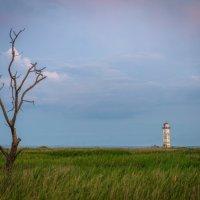 дерево и маяк :: Алексей Яковлев