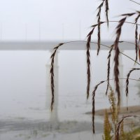 В тумане :: Сергей Шаврин