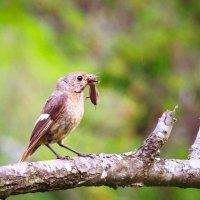 6 птенцов, ну, как прокормить? :: Валерия Валерия