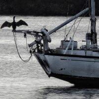 птичка на проводе :: svabboy photo