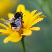 летние цветы 5 :: Дмитрий Барабанщиков