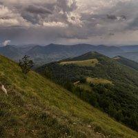 Июль в горах 2 :: Андрей Дворников