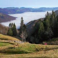 тумана белая река :: Elena Wymann