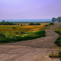 деревенская дорога :: Ольга Чазова