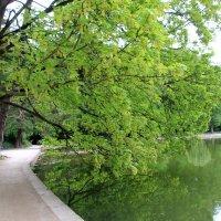в тени зелени :: Olga