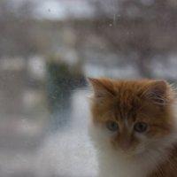 Семен Сменыч :: Алексей Дибривный