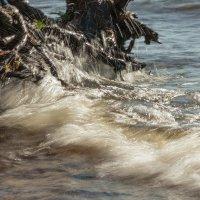 Вода и корни :: Виталий