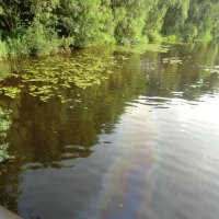 Река в реке или какая экология - такая онкология (Владимир Павлов) :: Владимир Павлов
