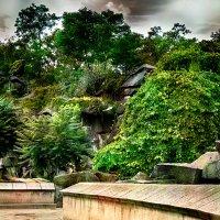 Среди камней и деревьев :: Татьяна Каримова