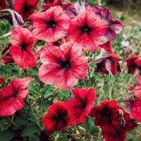 Неизвестные цветы,небывалой красоты :: Роман