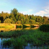 Летний вечер.Росы в травы, сумерки в луга... :: Павлова Татьяна Павлова