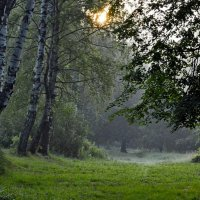 На утренней поляне.... :: Юрий Цыплятников