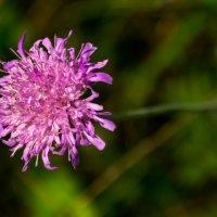 Цветок :: Александр Витебский
