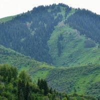 Зеленая гора :: Горный турист Иван Иванов