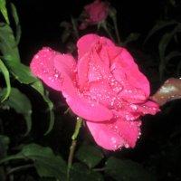 После дождя... :: Valentina