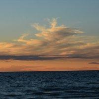 море в закате :: linnud
