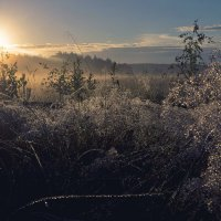 Рассвет и туман. :: Ирэна Мазакина