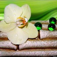 Орхидея :: °•●Елена●•° Аникина♀