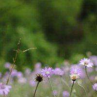 Нежный цветок :: Полина Дюкарева