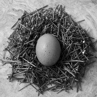 Гнездо. :: сергей лебедев