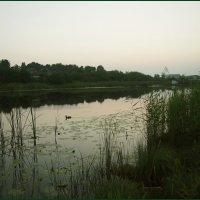 Тихий вечер. :: сергей лебедев