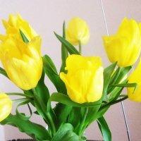 Желтые тюльпаны :: татьяна