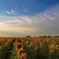 Солнца на закате. :: Svetlana Sneg