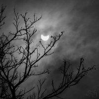 Лунное затмение :: Сергей Буданов