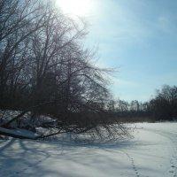 Зимнее озеро :: марина ковшова