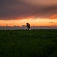 В поле... :: Светлана Салахетдинова