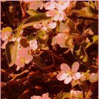 2.  Цветочки той яблони, возле которой скамейка :: Фотогруппа Весна.