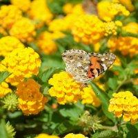 Маленькая бабочка. :: Оля Богданович