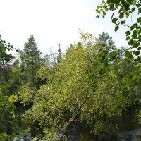 На реке Ширшема. Дачи от Северодвинска 7км. :: Михаил Поскотинов