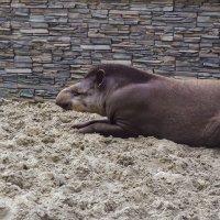 Лежит на песочке вот такой странный зверь :: Света Кондрашова
