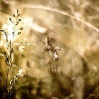 ..в траве... :: Лилия .